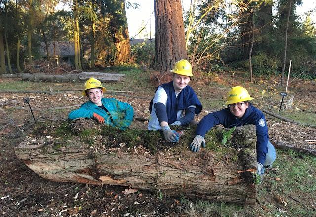 Three AmeriCorps members wearing yellow hard hats kneel behind a log.