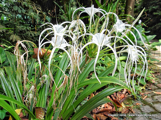 Diferentes flores no jardim Botânico de Penang
