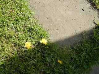 Цветы, насекомые на даче 2016 весна вторая часть