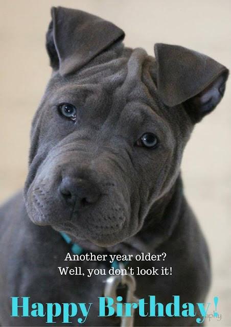 Randomocity Puppy Tales Dog Mama Memes