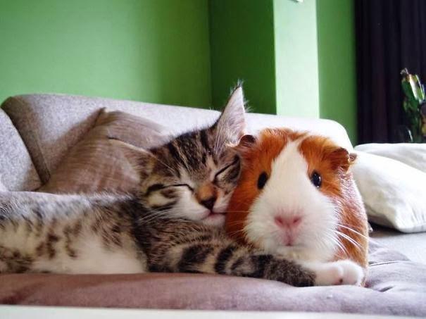 Neobična prijateljstva različitih životinja