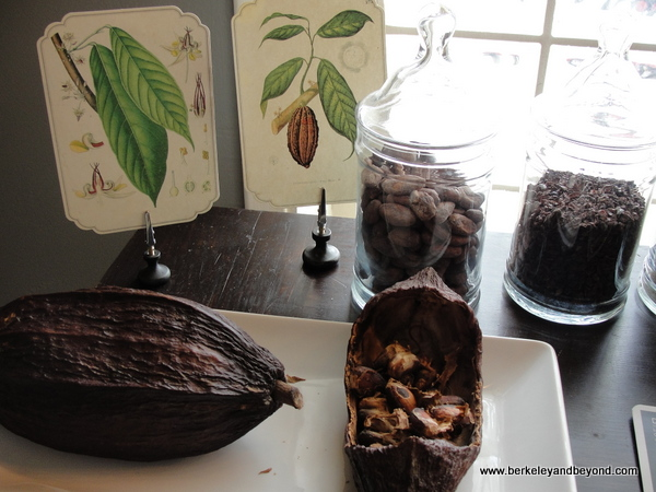 cacao pod and bean display at Dick Taylor Craft Chocolate in Eureka, California