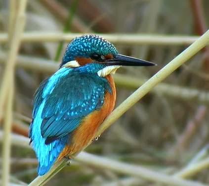http://ampablauetpontdesuert.blogspot.com.es/