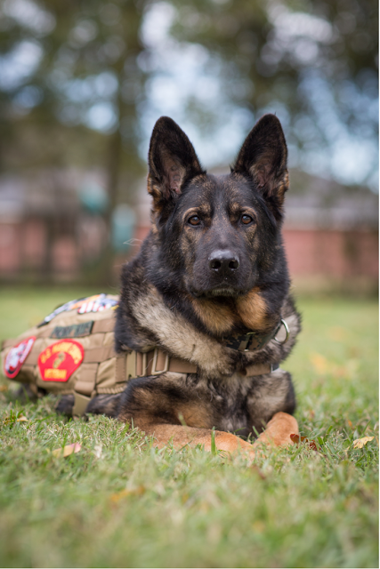 Mission K9 Retired Working Dogs Rescue