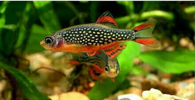 ikan hias aquarium mini