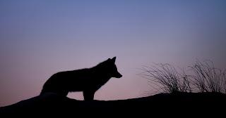 Czy powinno się modlić o wilki?