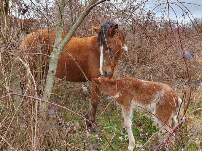 Ξάνθη: Έσωσαν νεογέννητο αλογάκι γιατροί του Κέντρου Υγείας Εχίνου
