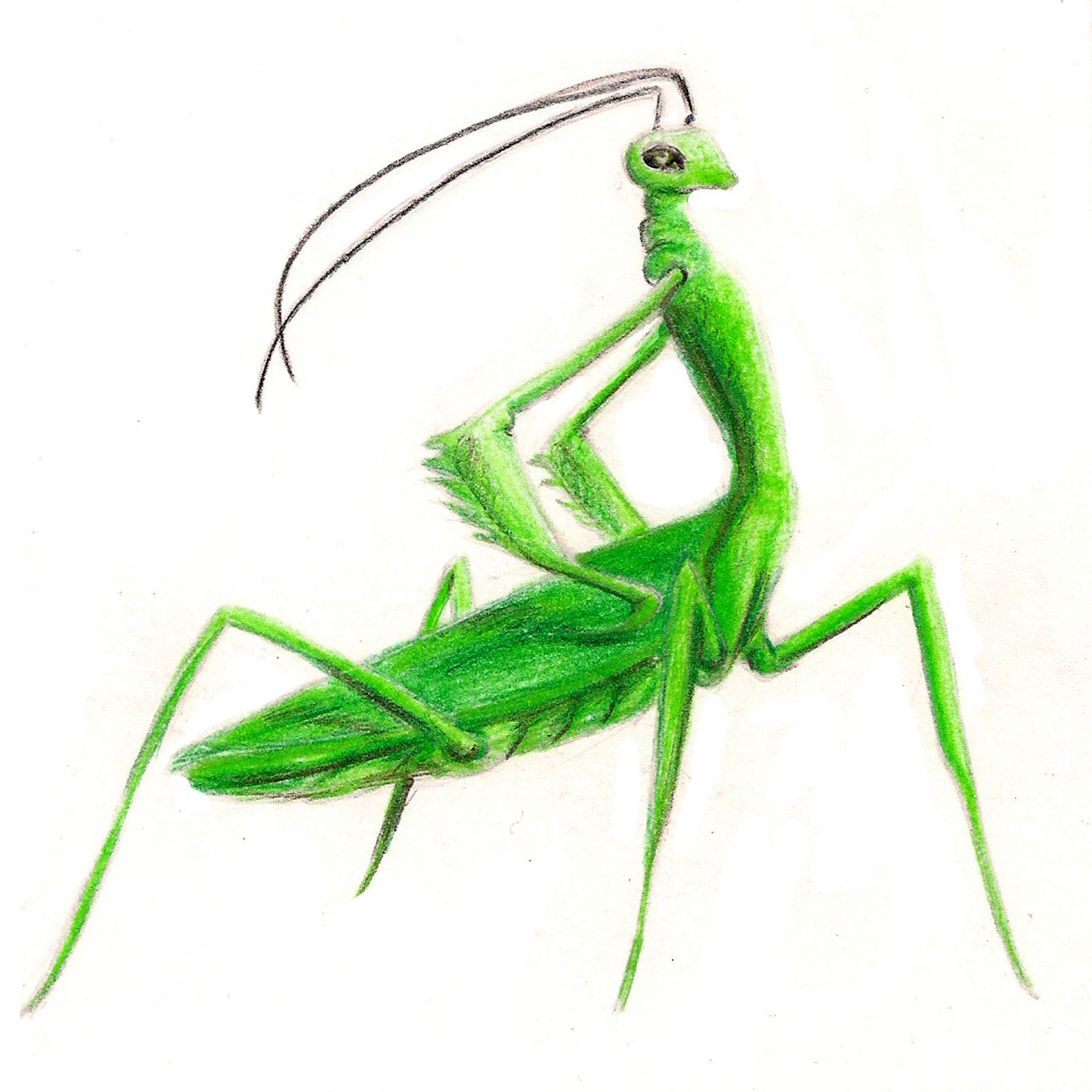 Kate Guthrie: Zodiac Bugs!
