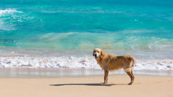 Tips for Traveling with the Family Dog
