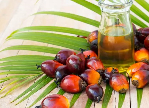 Manfaat Minyak Kelapa Sawit dan Efek Buruknya Bagi Kesehatan