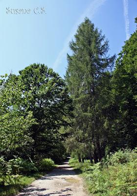 Selva de Irati - Navarra