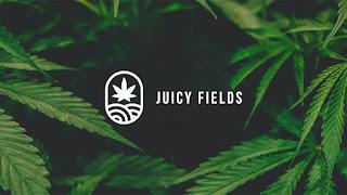 Juicy Fields منصة زراعة القنب الطبي العالمي