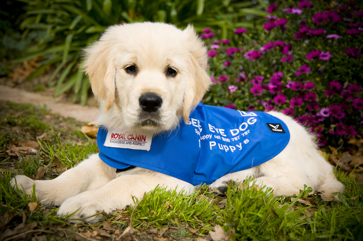 Guide Dog Puppy Carers