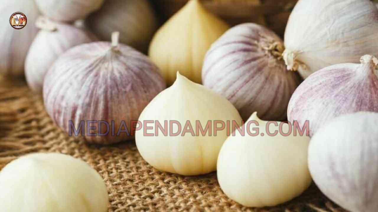 Rasakan 7 Manfaat Konsumsi Bawang Putih Untuk Kesehatan