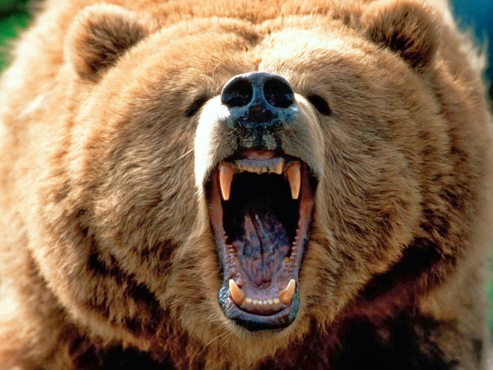 10 most dangerous game animals