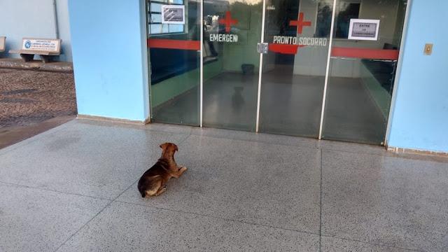 Cão passa a noite na porta de hospital à espera de dono internado: 'Esse é amigo fiel', diz funcionário