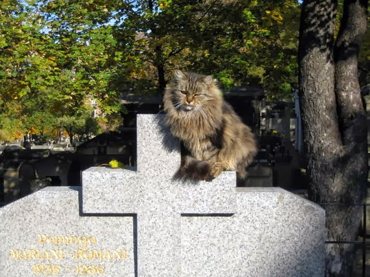 Cat at the Montmartre Cemetery