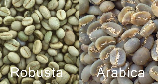 Perbedaan Kopi Arabika Dengan Robusta yang Perlu Diketahui