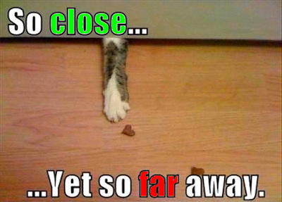 Cat treat • So close... Yet so far awa