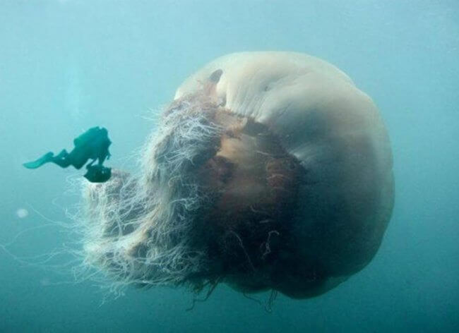 12 Frightening Pictures That Made Us Reconsider About Swimming In The Ocean