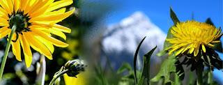 Gambar bunga Untuk Cover  Facebook indah