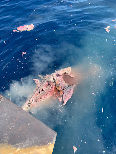 IMG 20200904 WA0004 - Como todos los años los arrastreros de Santa Pola cogiendo atunes en descomposición
