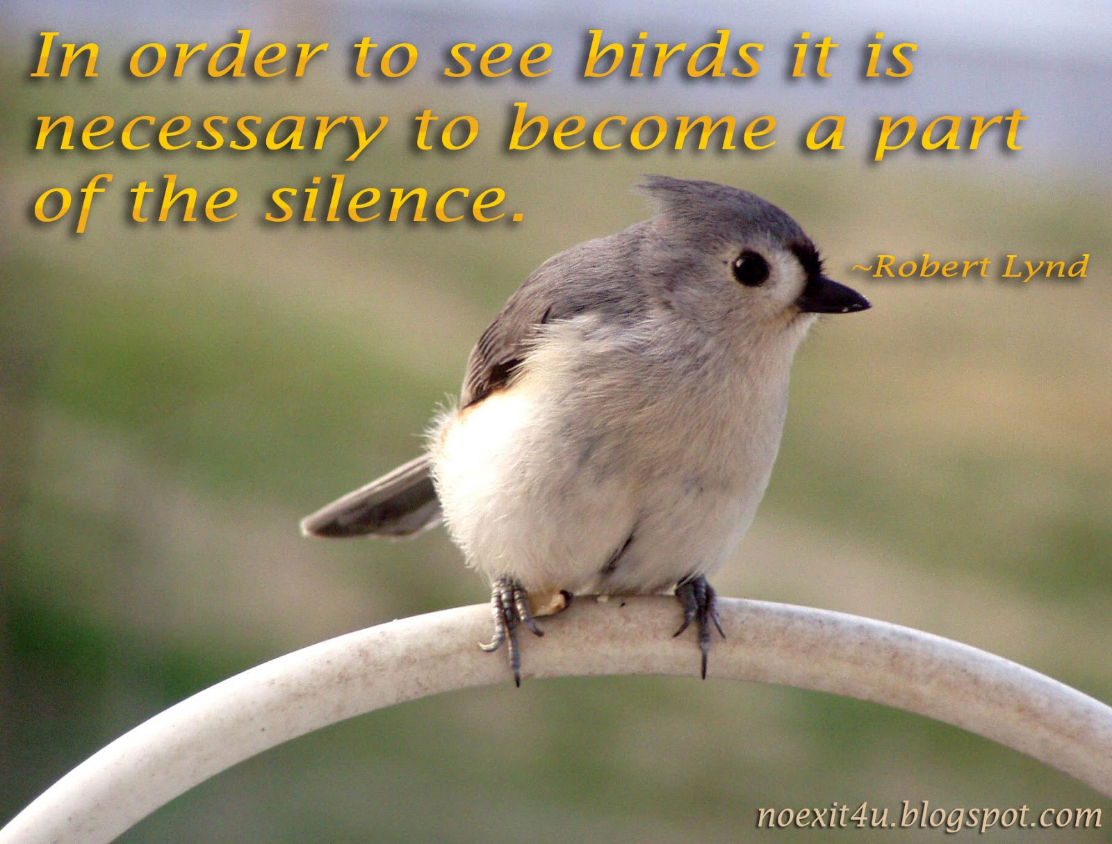 Speech on importance of birds animals in our life