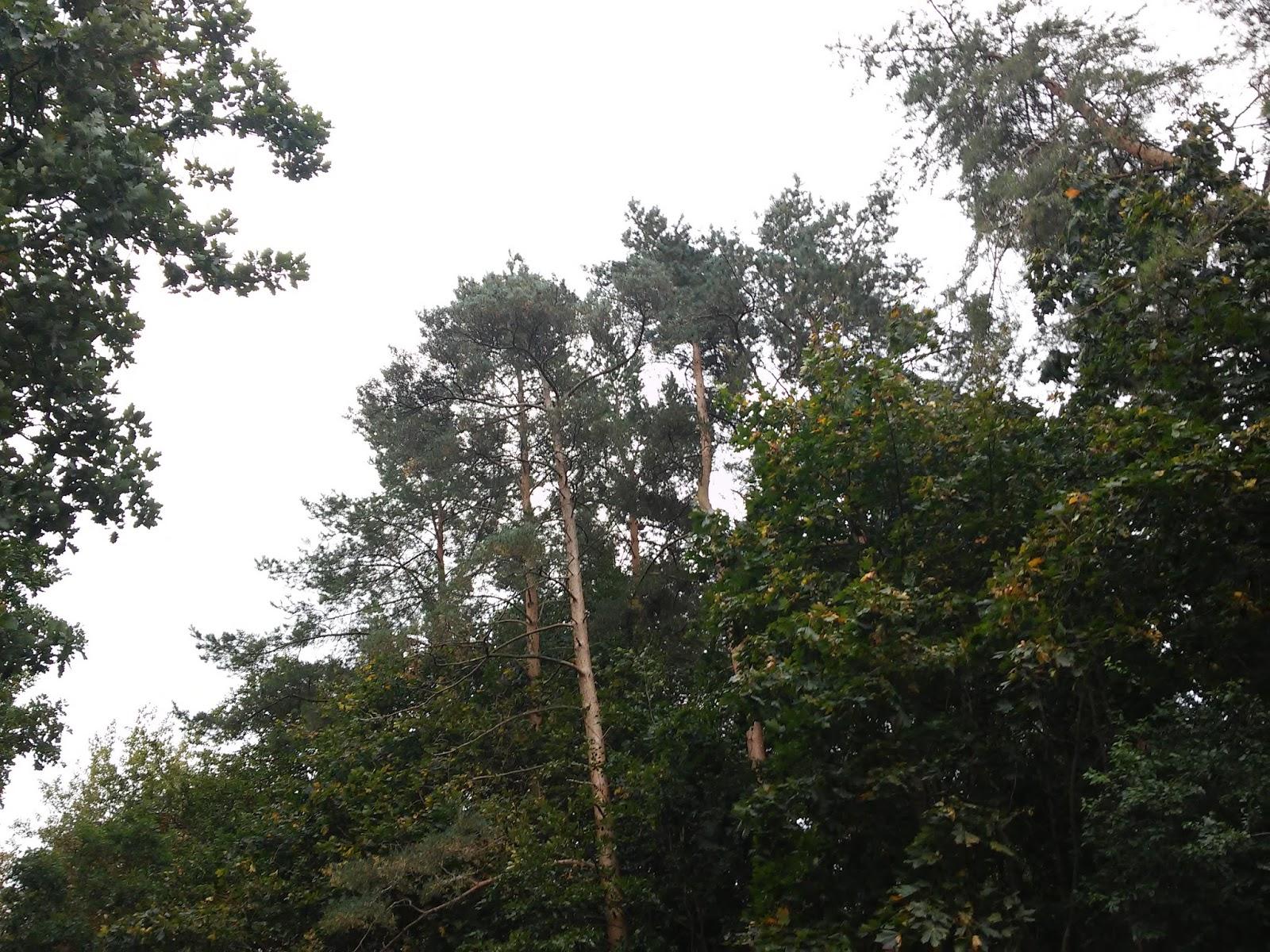 Wierszyk Na życzenie W Lesie