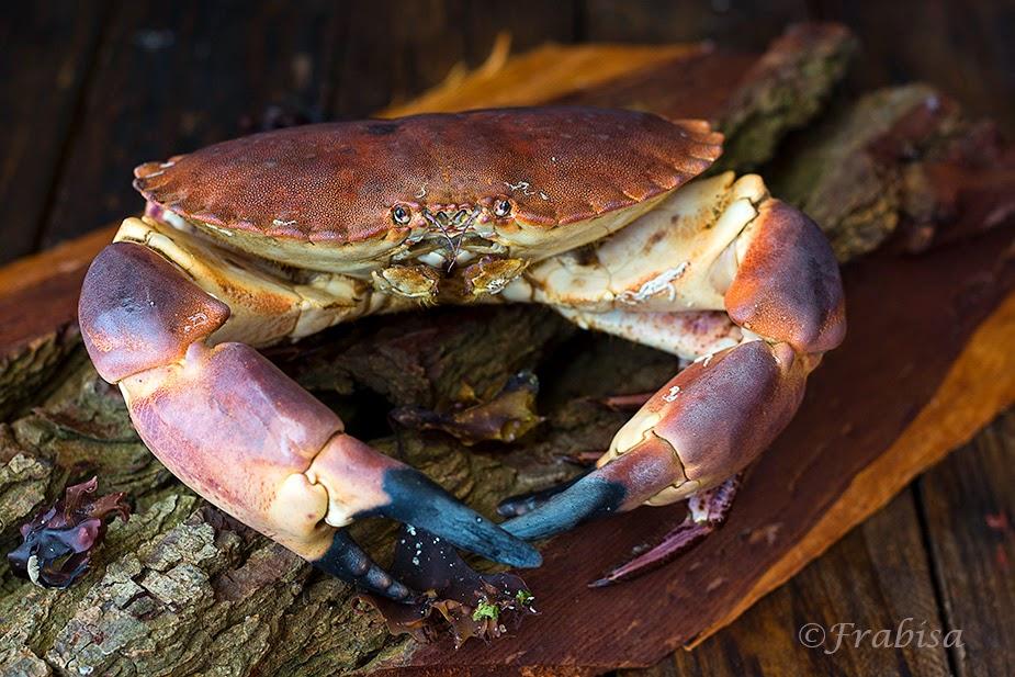 buey de mar, marisco, galicia