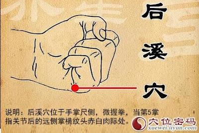 後溪穴位 | 後溪穴痛位置 - 穴道按摩經絡圖解 | Source:xueweitu.iiyun.com