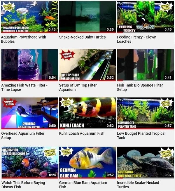 Aquarium Fish & Filters - Youtube Short Videos