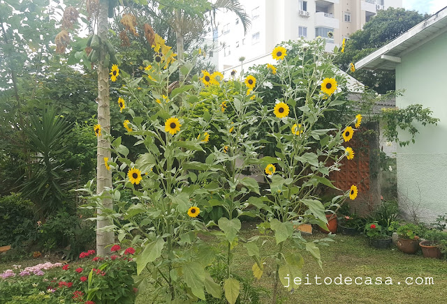 garden- with-sunflower