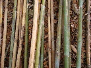 cara-mengawetkan-bambu.jpg