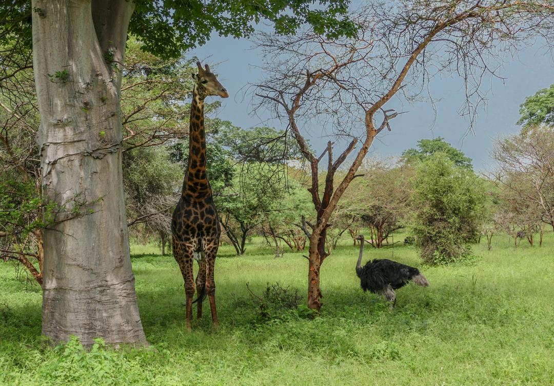 Bandia Safari