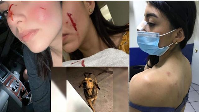 Video: Rodolfo Corazón el perrito acusado injustamente de morder a una chava y asesinado a machetazos por su novio en los Mochis; Sinaloa