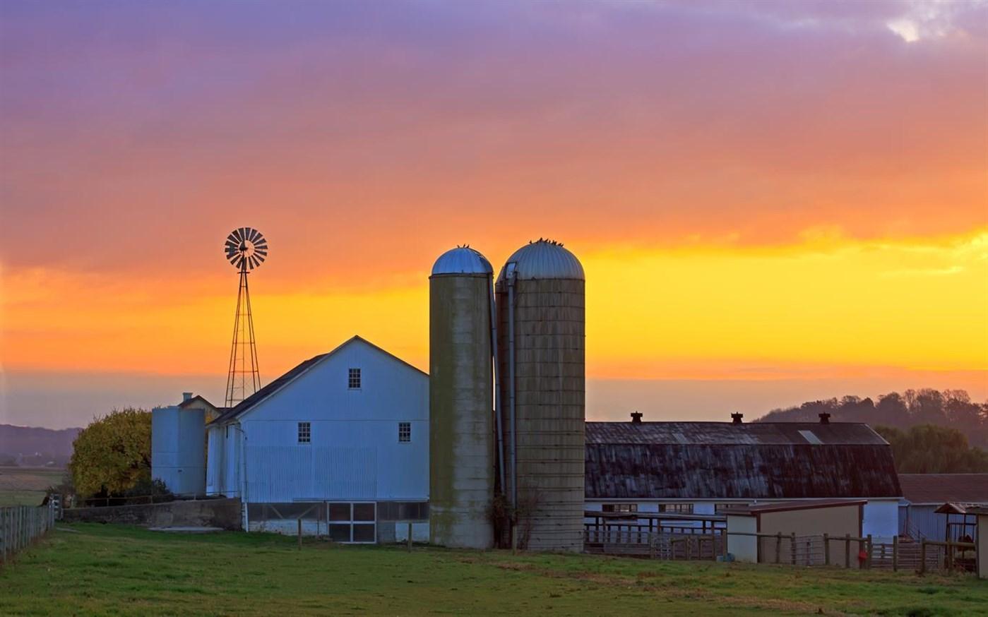 Download Day on the Farm, Tema per Windows 10