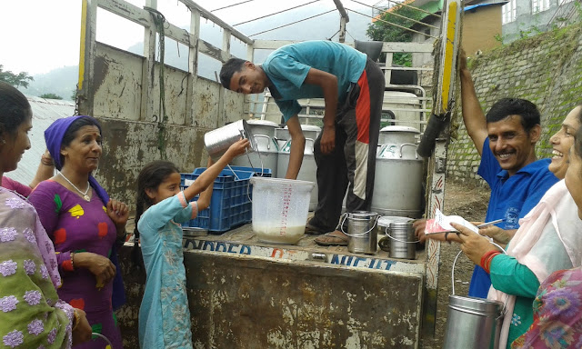 Milk Collection by Amrit Dhara Milk Producers Cooperative