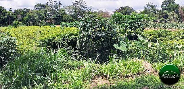 Tanah Sawah Produktif dekat SGM Prambanan