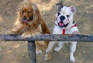 Οδηγίες βασικής εκπαίδευσης σκύλου στην υπακοή