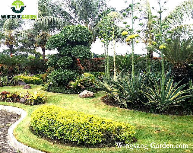 Jasa Pembuata Taman Bali Tropis