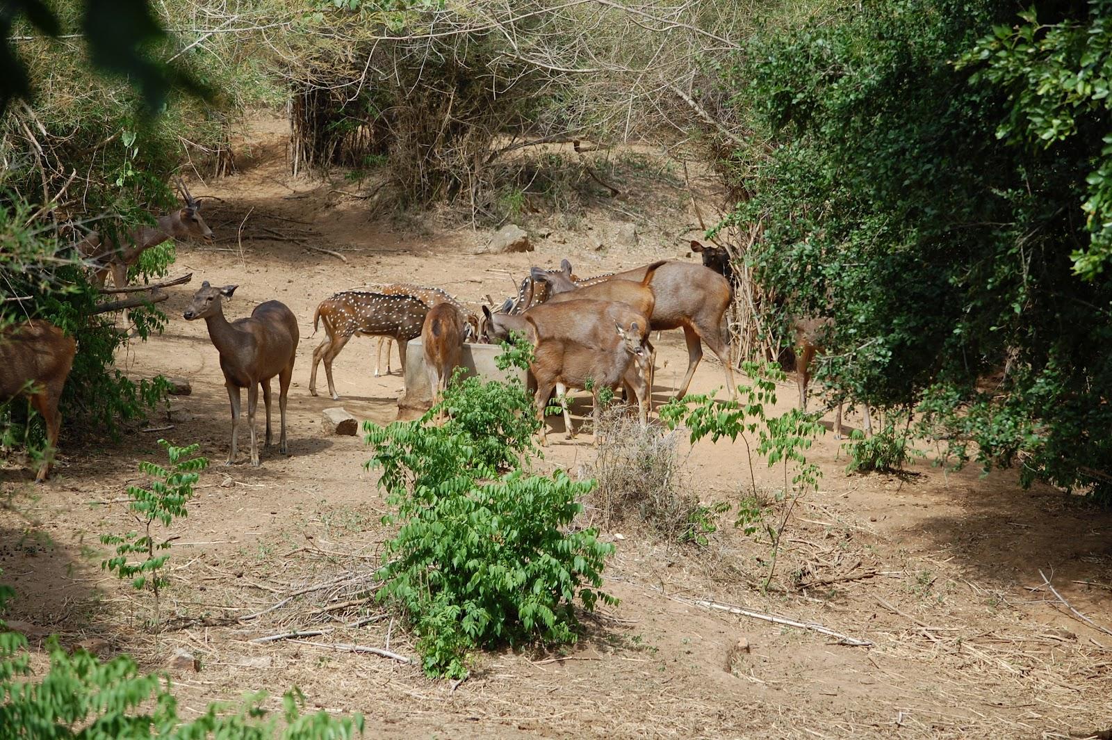 bannerghatta national park information