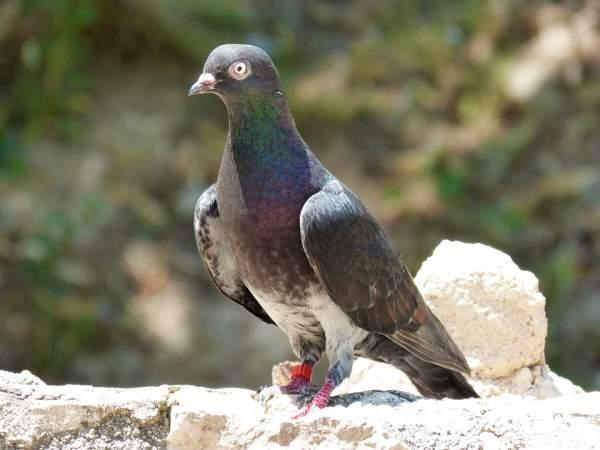 Ketahui 5 Burung Termahal di Dunia yang Pernah Diperjualbelikan!
