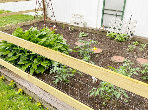 Garden with wooden and wire fence surround