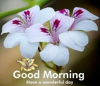 New Good Morning Shayari of 2020
