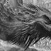 [Reseña libro] Fuego y sangre de George R.R. Martin: Un completísimo relato de los primeros reyes Targaryen