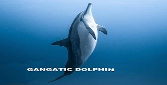 National Aquatic Animal Know about India