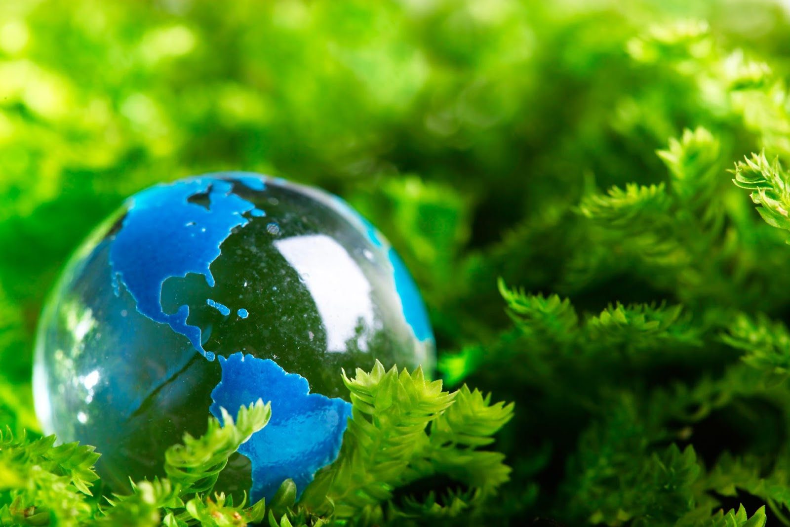 Manfaat Sertifikasi ISO 14001 Bagi Perusahaan