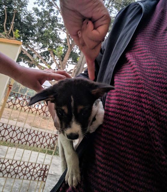 Sourajit Saha With Puppies 1