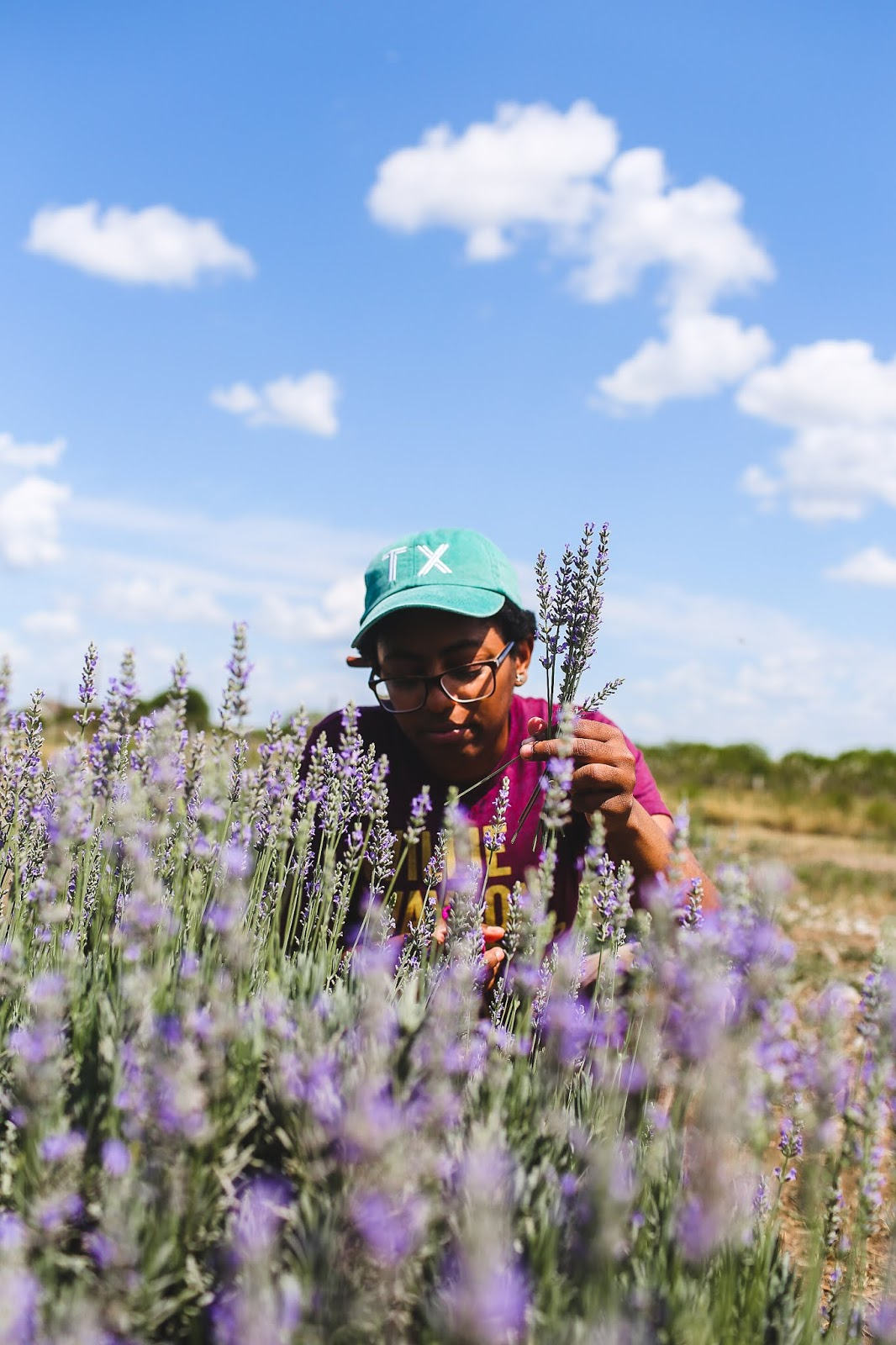 Blanco Texas Lavender Festival