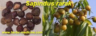 Fruit advantages Sapindus rarak